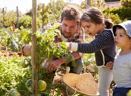 A Beginner's Guide to Starting a Veggie Garden