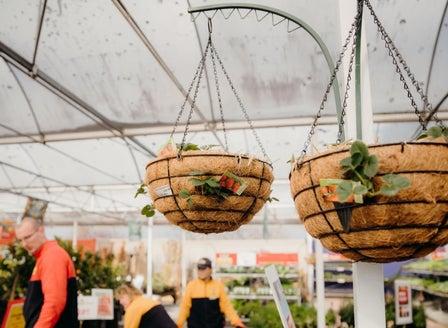 DIY Strawberry Hanging Baskets